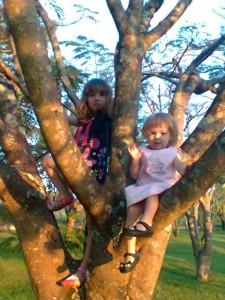 Subindo na árvore!