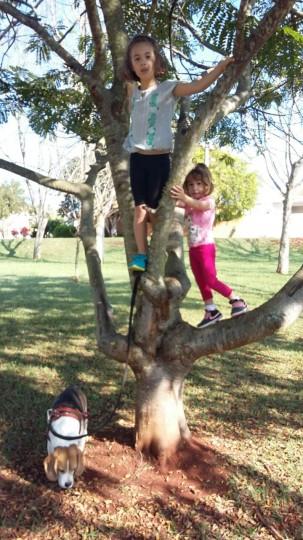 Subindo na árvore, elas adoram! julho 2015
